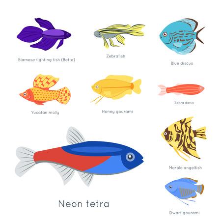이국적인 열 대 물고기 다른 색 수 중 해양 종 수생 자연 플랫 격리 벡터 일러스트 레이 션. 장식 야생 동물 만화 동물 상 수족관 물 해양 생물입니다. 일러스트