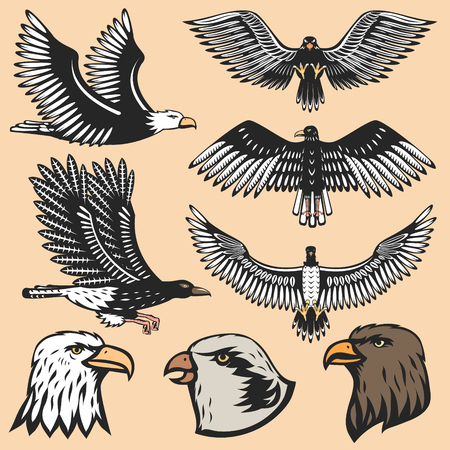 Eagle bird cartoon flying animal Illustration