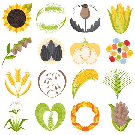 穀物種子穀物製品バッジ ベクトルのロゴのテンプレートは、天然植物ミューズリー粒状有機粥粉図を設定します。小麦の耳収穫アイコン有機ファー  イラスト・ベクター素材