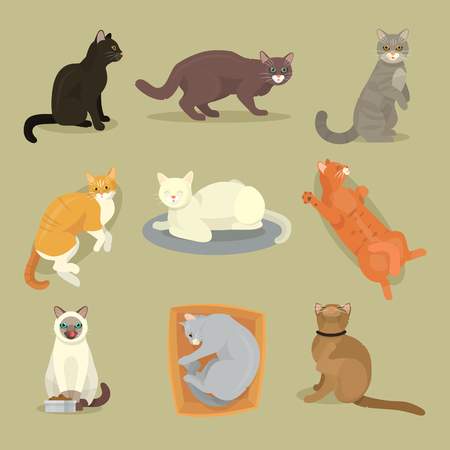 Different cat breeds cute kitty pet cartoon cute animal character set illustration. Mammal human friend cat breed animals icons. Cat s paws. Catlike movement and feline manner.