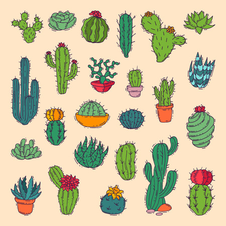 Cactus home nature illustration. 向量圖像
