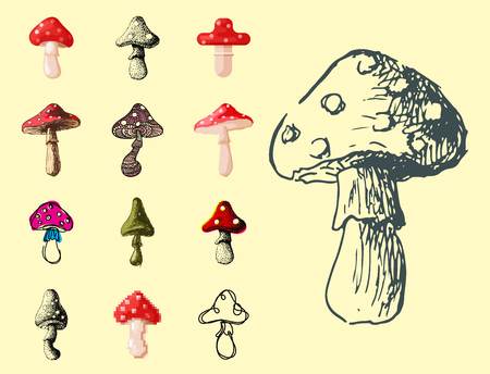 Amanita fly agaric toadstool mushrooms fungus different art style design vector illustration red hat