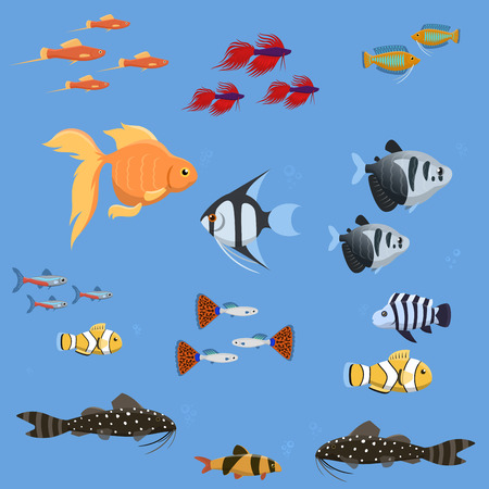 Exotic tropical aquarium fish different colors underwater ocean species aquatic nature flat vector illustration. Decorative wildlife cartoon fauna aquarium water marine life. Stock Vector - 88289994