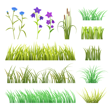 Vector green grass herb and flowers nature isolated on white background design template grassy elements illustration 向量圖像