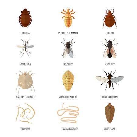 Insekten Parasit Ungeziefer Natur Pest Käfer Gefahr Tier Abwehr Tierwelt Krankheit Bug Vektor-Illustration. Vektorgrafik