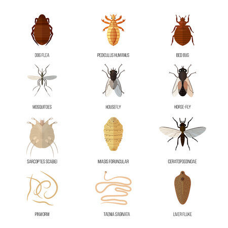 Insects parasite vermin nature pest beetle danger animal repellent wildlife disease bug vector illustration. Illustration