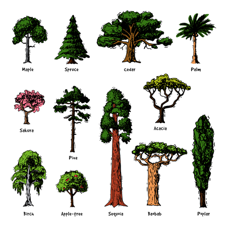 Tree types vector green forest pine treetops collection of birch, cedar and acacia or realistic greenery garden with palm and sakura illustration isolated on white background