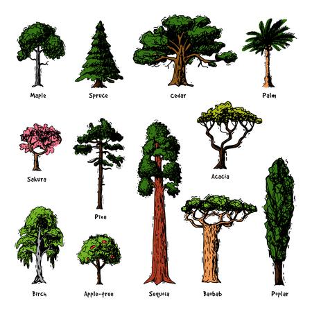 Types d'arbres vector collection de cimes de pin de forêt verte de bouleau, de cèdre et d'acacia ou jardin de verdure réaliste avec illustration de palmier et de sakura isolé sur fond blanc