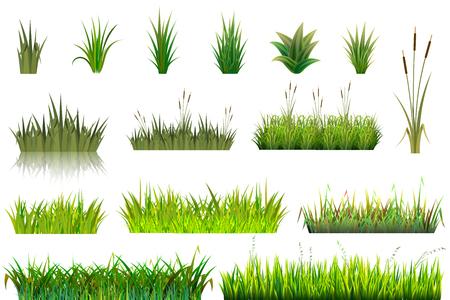 Grasvektorwiese oder Grasland und Gartenarbeitsatzblumenpflanzen der grünen grasartigen Feldillustration im Garten lokalisiert auf weißem Hintergrund. Vektorgrafik