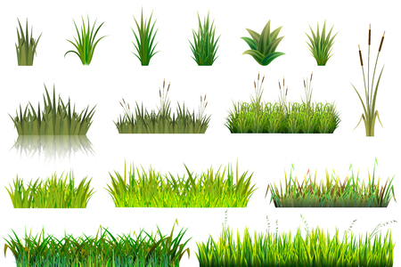 Grass vector grassland or grassplot and green grassy field illustration gardening set floral plants in garden isolated on white background.