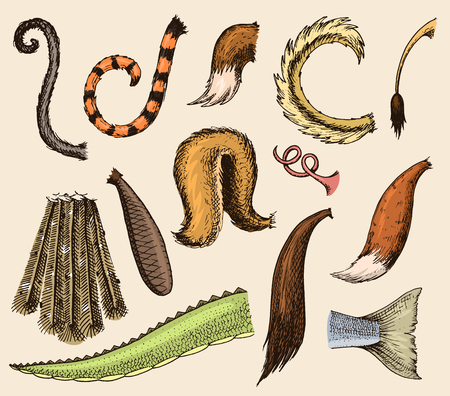 Animal tail vector animalistic tailed breast with furry feathers of limb illustration of tailend brush set isolated on background  イラスト・ベクター素材