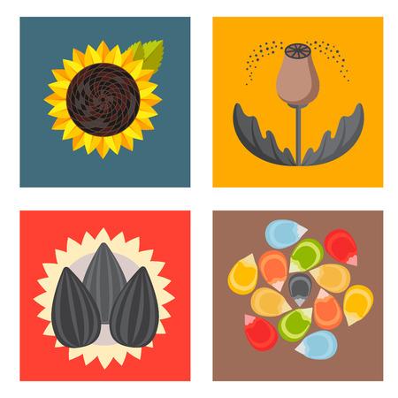 穀物種子穀物製品バッジベクターテンプレートは、天然植物ミューズリー粒状有機雑炊小麦粉のイラストを設定します。  イラスト・ベクター素材