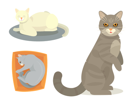 Different cat vector set illustration Ilustração