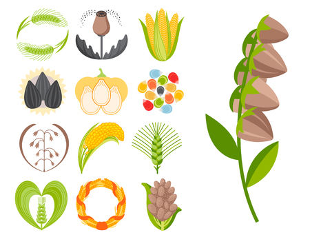 Cereal seeds grain product badge vector logo templates set natural plant muesli grainy organic porridge flour illustration. Wheat ear harvest icon organic farm food.  イラスト・ベクター素材