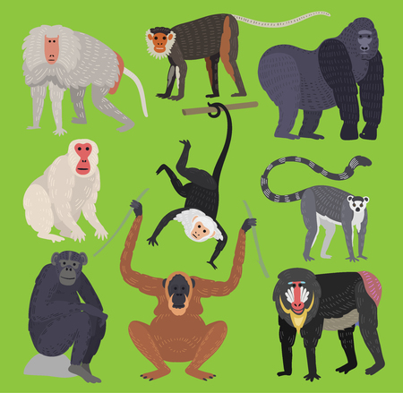 Different types of monkeys breed rare animal vector set. Cartoon macaque nature primate monkey chimpanzee, orangutan, toque character. Wild zoo ape chimpanzee wildlife jungle animal.