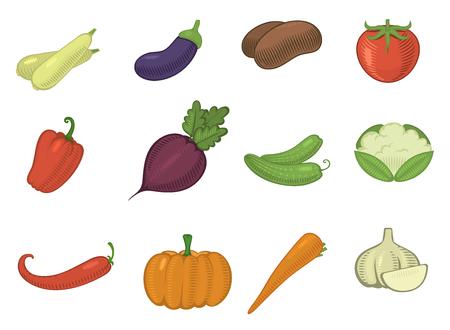 vector groenten gezonde tomaat, wortel, aardappel vegetariërs pompoen biologisch voedsel moderne vegetably webshop illustratie gegroeide symbolen set geïsoleerd op de achtergrond