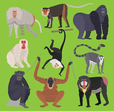 Different types of monkeys ape breed rare animal vector set. Cartoon macaque nature primate monkey chimpanzee, orangutan, toque character. Wild zoo ape wildlife jungle animal Illustration