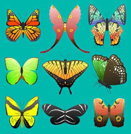 Butterfly vector colorful insect flying for decoration and beautiful butterflies wings fly in spring illustration set isolated on white background Stock Vector - 96611607