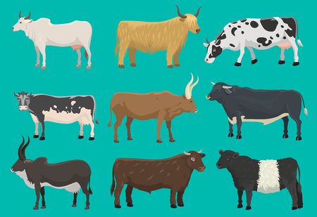 Vector of bulls and cows farm animal