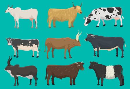 Vector of bulls and cows farm animal