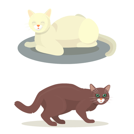 Different cat cute kitty pet cartoon cute animal character set illustration. Mammal human friend cat breed animals icons. Cats paws. Catlike movement and feline manner.