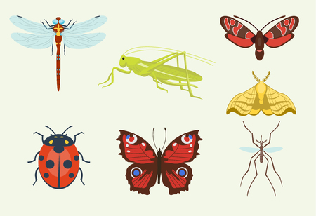 Colorful top view insects icons isolated on white wildlife wing detail summer worm and caterpillar bugs wild spider bee vector illustration. Nature pest ladybird mosquito small art sign.