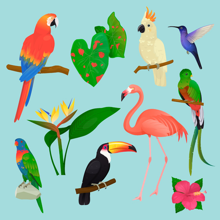 Tropical birds vector flamingo and exotic parrot or hummingbird with palm leaves illustration set of fashion birdie toucan in tropics isolated on background