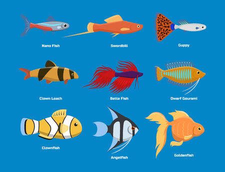 Exotic tropical aquarium fish different colors underwater ocean species aquatic nature flat vector illustration. Decorative wildlife cartoon fauna aquarium water marine life. Illustration