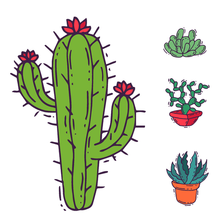 Cactus home nature vector illustration of green plant cactaceous tree with flower Stock Photo