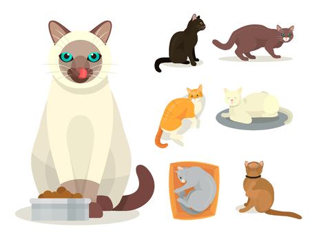 Different cat breeds cute kitty pet cartoon cute animal cattish character set catlike illustration