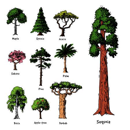 Types d'arbres vector collection de cimes de pin de forêt verte de bouleau, de cèdre et d'acacia ou jardin de verdure réaliste avec illustration de palmier et de sakura isolé sur fond blanc Vecteurs