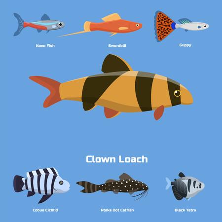 Exotic tropical aquarium fish different colors underwater ocean species aquatic nature flat vector illustration.