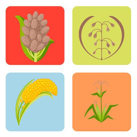 穀物種子穀物製品バッジベクターロゴテンプレートは、天然植物ミューズリー粒状有機雑炊小麦粉のイラストを設定します。小麦耳収穫アイコン有