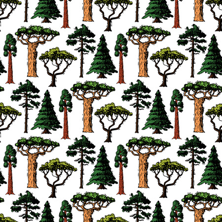 Vector tree sketch hand drawn style types green forest pine treetops collection of birch, cedar and acacia or greenery garden with palm and sakura illustration seamless pattern background.