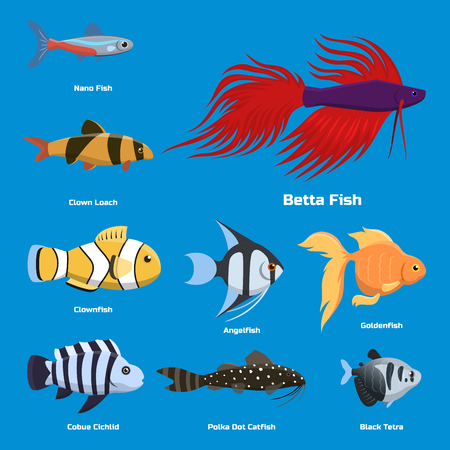 Exotic tropical aquarium fish different colors underwater ocean species aquatic nature flat vector illustration