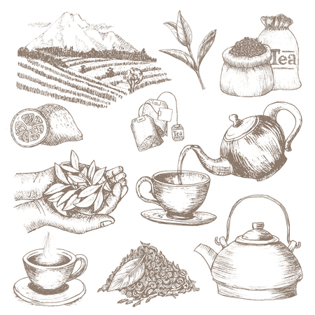 Bevanda a base di erbe della bevanda di vettore del tè con foglie secche in tazza da tè sull'ora del tè insieme dell'illustrazione della teiera e tazza in contenitore da tè isolato su priorità bassa bianca Vettoriali