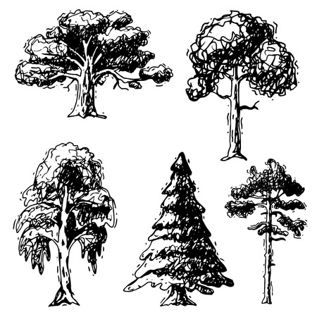 Vector tree sketch hand drawn style types green forest pine treetops collection of birch, cedar and acacia or greenery garden with palm and sakura illustration isolated on background Illustration