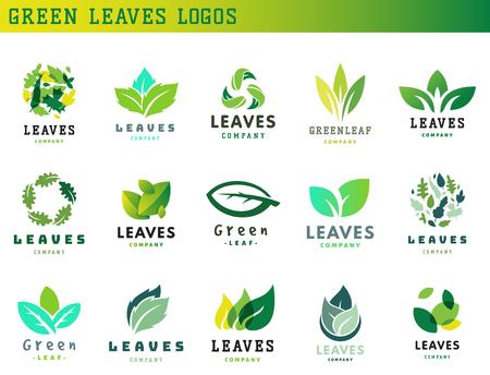 Green leaf eco design element icon friendly nature elegance symbol and decoration floranatural element ecology organic vector illustration. Abstract bio foliage decorative flora.