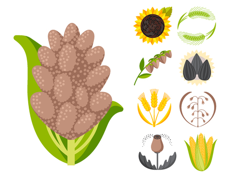 Cereal seeds grain product badge vector logo templates set natural plant muesli grainy organic porridge flour illustration. Wheat ear harvest icon organic farm food. Illustration