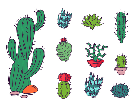 Cactus home nature vector illustration of green plant cactaceous tree with flower Illustration