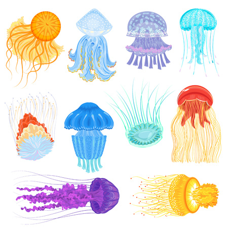 Jellyfish vector ocean jelly-fish and underwater nettle-fish illustration set of jellylike glowing medusa in sea isolated on white background Stock Illustratie