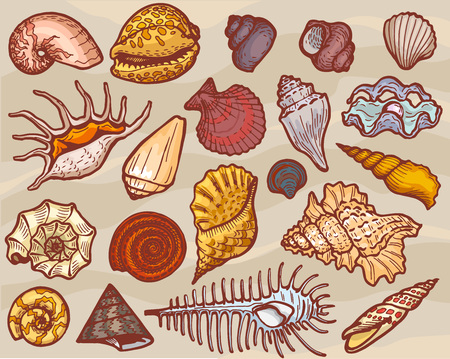 Shells vector marine seashell and ocean cockle-shell underwater or undersea illustration set of shellfish and clam-shell or conch-shell isolated on background