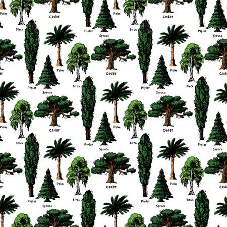 Vector árbol bosquejo tipos de estilo dibujado a mano bosque verde copas de los árboles de pino colección de abedul, cedro y acacia o jardín verde con fondo de ilustración de palmeras y sakura. Ilustración de vector