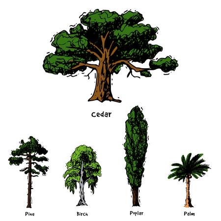 Vector albero schizzo disegnato a mano stile tipi verde foresta pino cime degli alberi raccolta di betulla, cedro e acacia o giardino verde con palme e sakura illustrazione sfondo Archivio Fotografico
