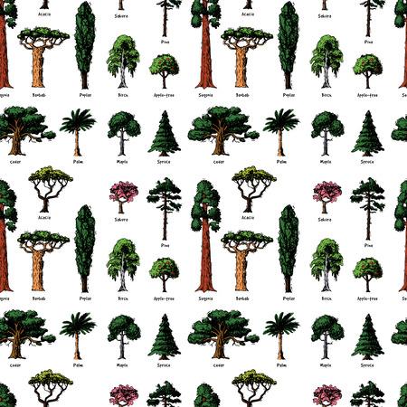Vector boom schets hand getrokken stijl typen groen bos grenen boomtoppen collectie van berken, ceder en acacia of groen tuin met palm en sakura afbeelding achtergrond.