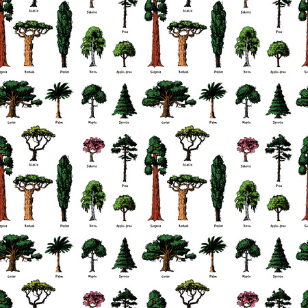 Vector tree sketch hand drawn style types green forest pine treetops collection of birch, cedar and acacia or greenery garden with palm and sakura illustration background.