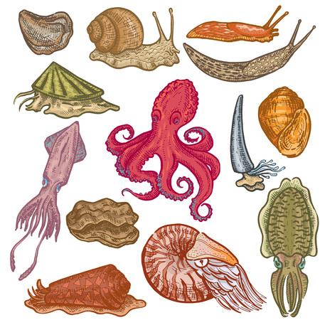 Coquillages vecteur animal marin poulpe mollusques caractère animal poulpes avec tentacule huître escargot en mer illustration ensemble de fruits de mer seiche devilfish isolé sur fond blanc
