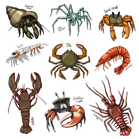 Skorupiaki wektor krab krewetki ocean homar i raki lub raki owoce ilustracja skorupiaki zestaw znaków zwierząt morskich krewetki na białym tle