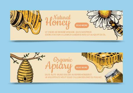 Honey waxing bee and beehive flyer. Poster organic honey and apiary, beehive and chamomile dessert nutrition vector illustration. Banner with hand drawn pictures set of apiary. Banco de Imagens - 124598764