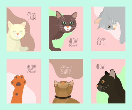 Cats show cards grooming or veterinary feline flyer vector illustration. Cute kitten pet poster. Funny animal studio. Lovely friendship advertisement pussy cat character.